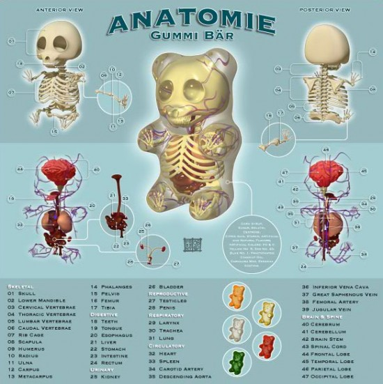 Gummi Anatomie by Jason Freeny