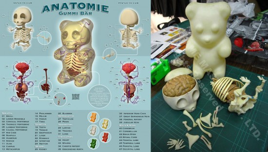 3D Gummi Anatomy Puzzles by Jason Freeny