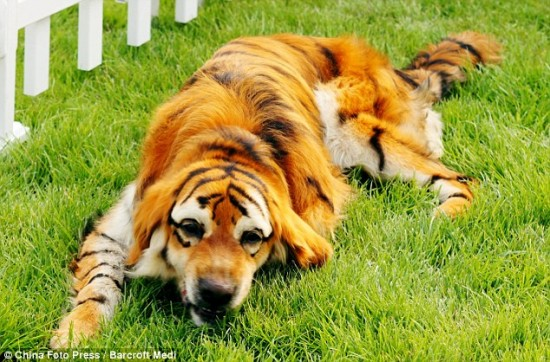 Your Dog is Not a Canvas: Dying Dogs with Food Coloring