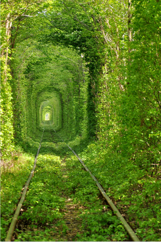 tunnel of green, photograph by Oleg Gordienko