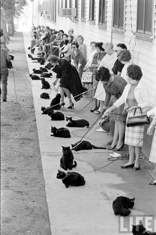 Black cats auditions, 1961