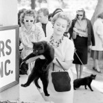 Black cat auditions, 1961