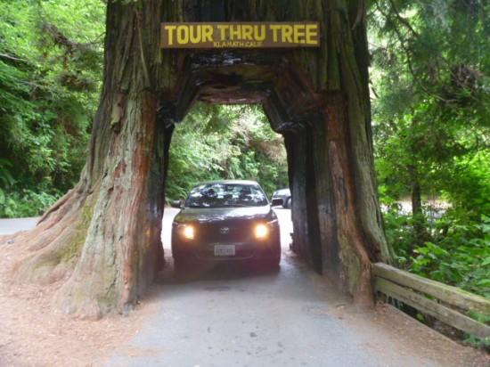 Drive-Thru Trees