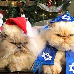 Christmas and Hanukkah Cats