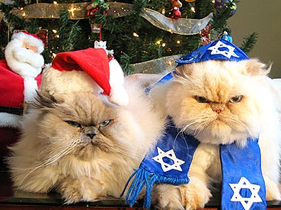 Christmas and Hanukkah Cats
