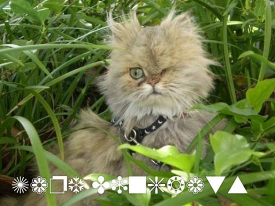 Dingbats cat font