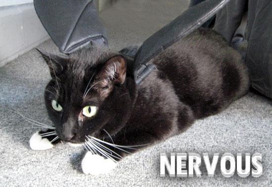 Nervous cat font
