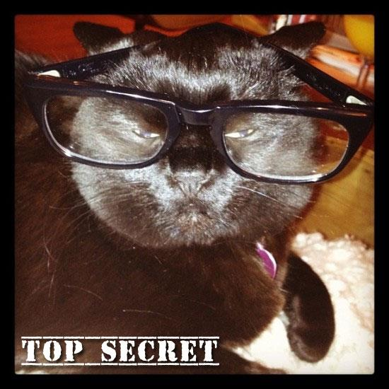 Top Secret cat font