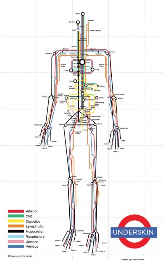 Human Body Subway Infographic Map by Sam Loman