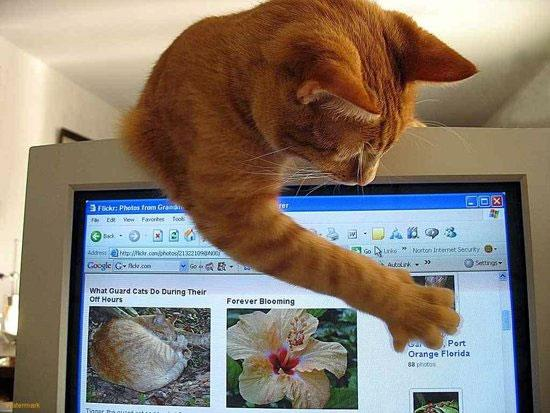 cats on computers