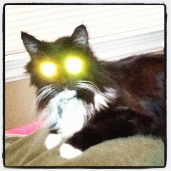 """Conor Oberst has nothing on my cat!"" #brighteyes #lasercats @jeremyriad"