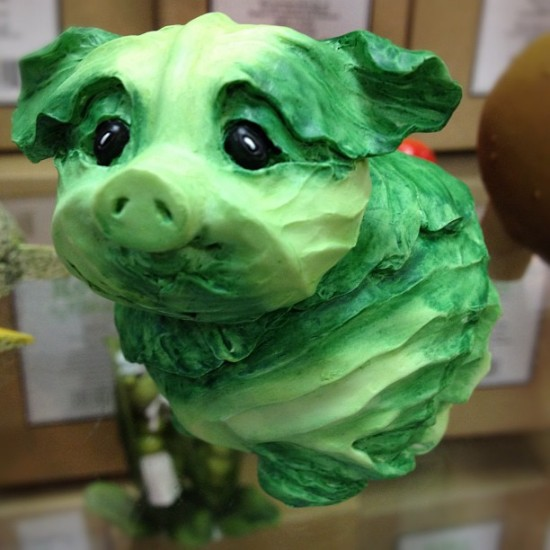 Precisely, a cabbage pig. Photo by @stacyjean5