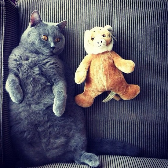 A cat and a teddybear. Awwww... posted by @cats_of_instagram