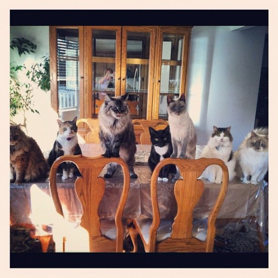 That's a lot of cats on the table @cats_of_instagram!