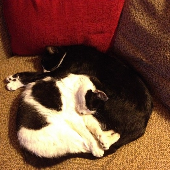 Yin yang cats who live with @thinkspace_art. Awwww...