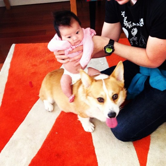 Kiki riding Chimichanga the Corgi. Photo by @jellystones.