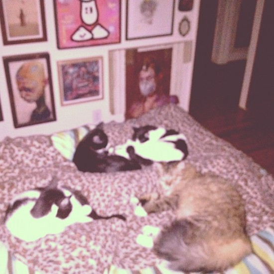 Cats and art: take 3: Four happy artsy cats who live with @thinkspace_art.
