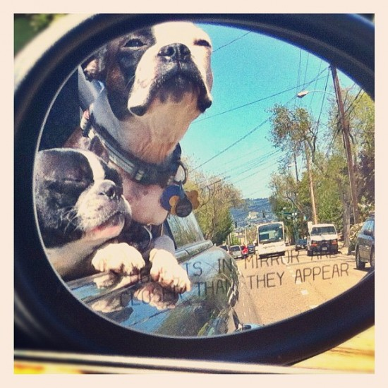 Dogs in mirror are even cuter than they appear. Photo by @tweedlebop.