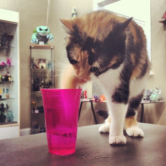 Lulubell store cat sampling her person's beverage. Awww... Photo by @luluamy.