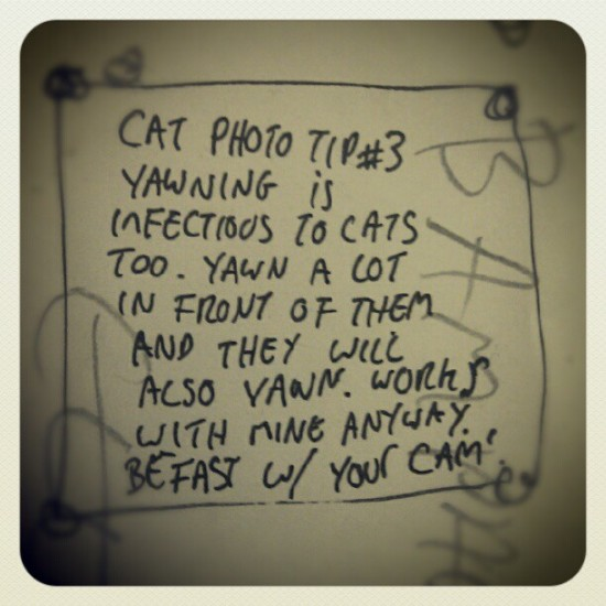 Cat yawning: Notes from the House of Godmachine