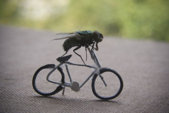Biker Fly by Nicholas Hendrickx