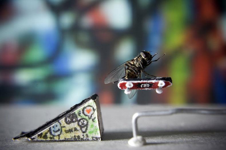 Skater Fly by Nicholas Hendrickx
