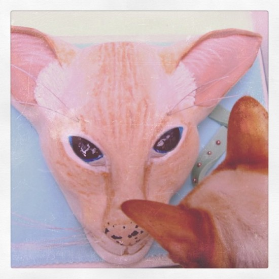 Hairless cat cake by @icedovercakes. Photo by @miss_cakehead.