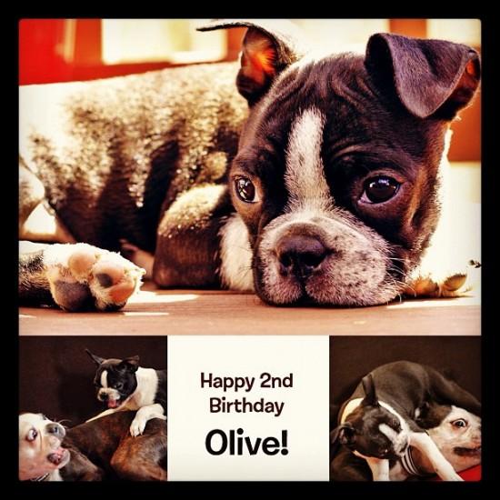 Life imitating art (above)? Happy birthday Olive! Photo by @tweedlebop.