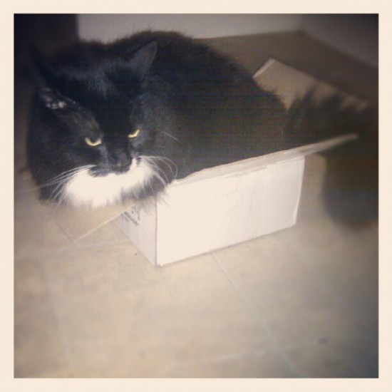 Cat in a box 2 by @godmachine.