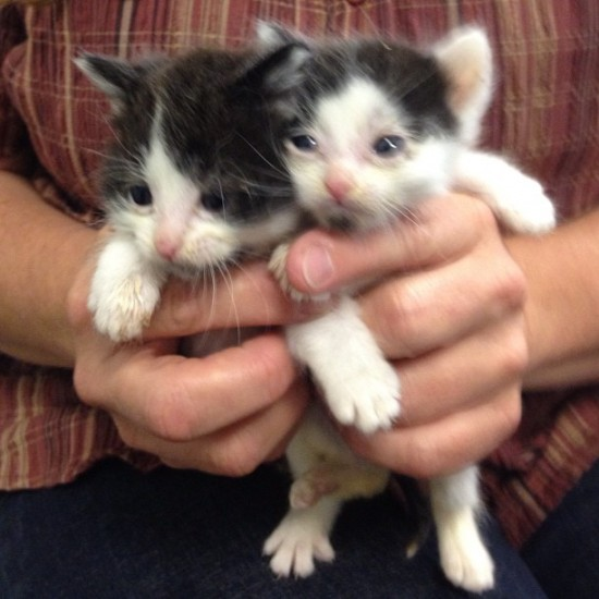 OMG OMG OMG. It's @rat136 with two kittens that will need homes soon. OMG OMG OMG.