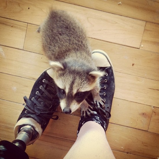 A prosthetic leg and a pet raccoon? Photo by @kat75hrine.