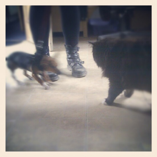 Dog (Winston) meets Cat (Bear). Check the size differential. Photo by @godmachineUK.