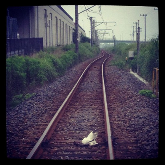 There's a cat on the tracks! A cliffhanger if there ever was one. By @shirahamatoy in Japan.