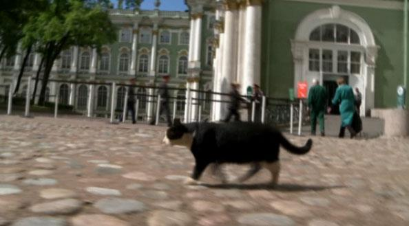 Cats at The Hermitage Museum in Russia