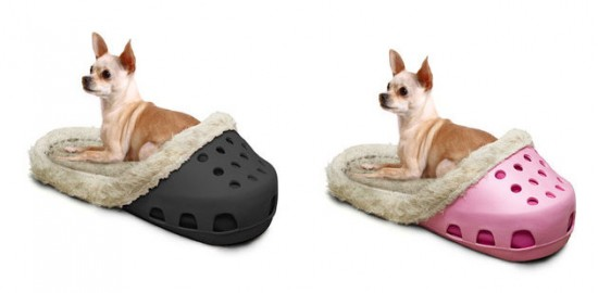 dogs in crocs