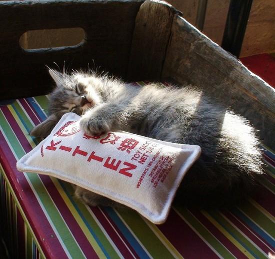 Cheeky Beastie kitten toy sauce
