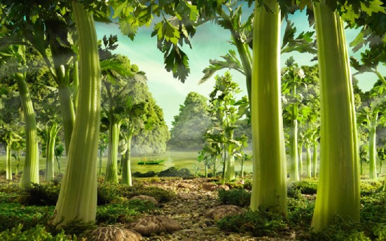 Celery Forest © Carl Warner