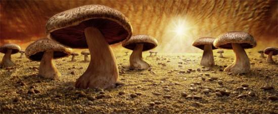 Mushroom Savanna © Carl Warner