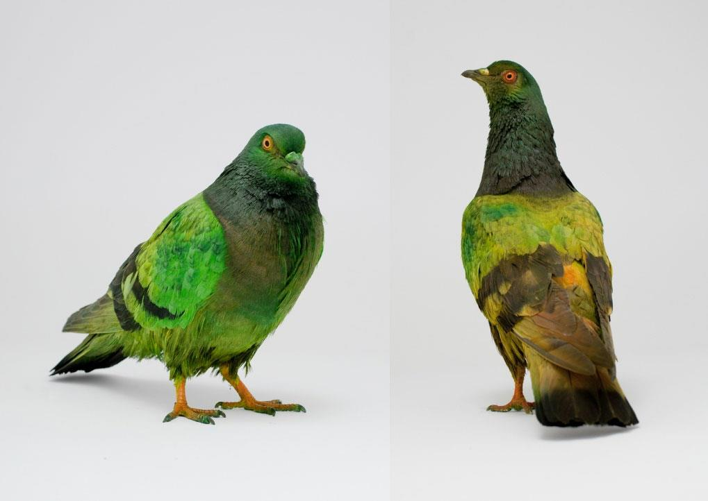 Some Pigeons are More Equal than Others by Julian Charrière with Julius von Bismarck