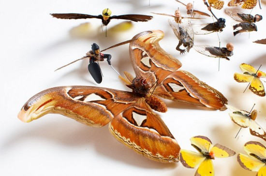 Pest © Amy Swartz
