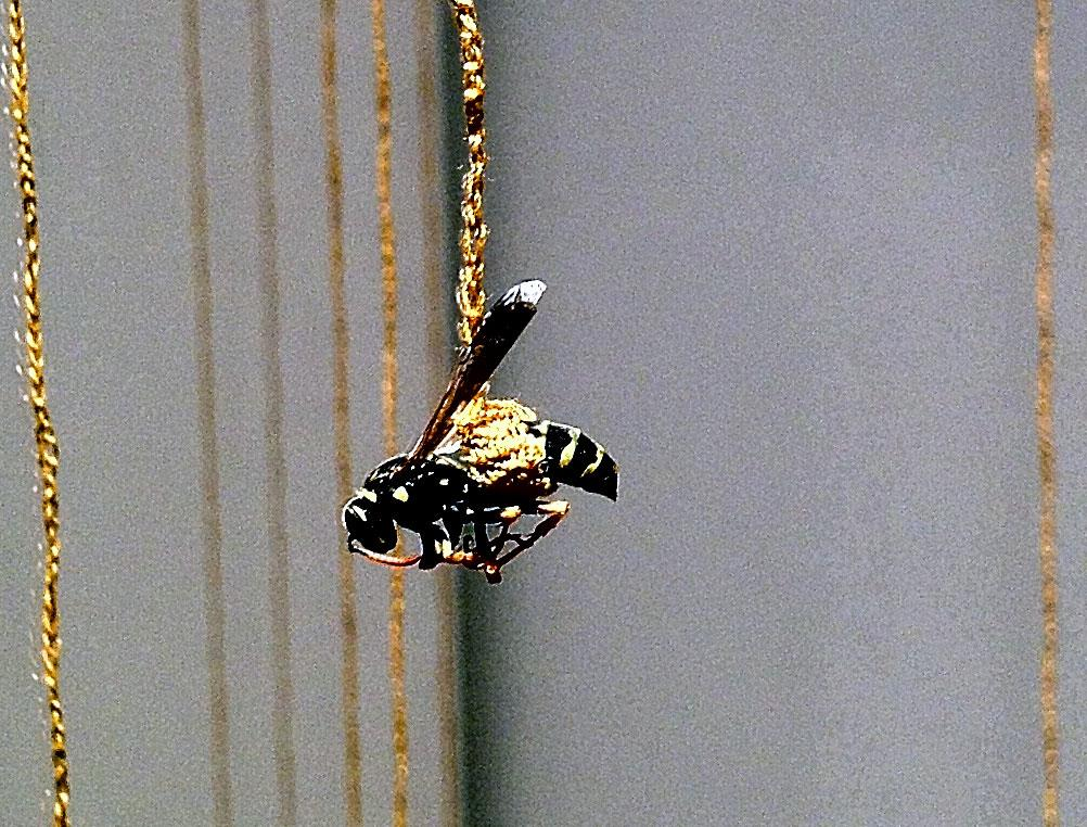 42 Wasps by Esther Traugot