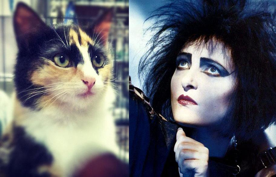 goth cat looks like siouxsie sioux