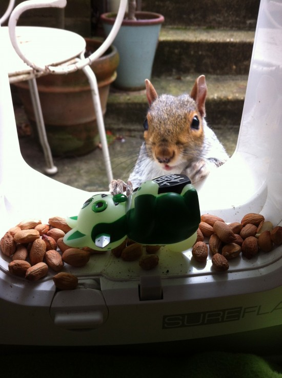 Jeremycat in the UK (with squirrel friend), collection of @delme