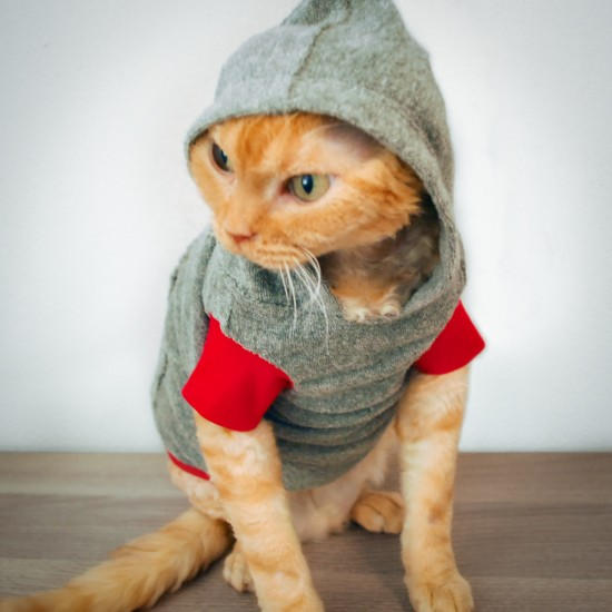 Cat-toure cat hoodies