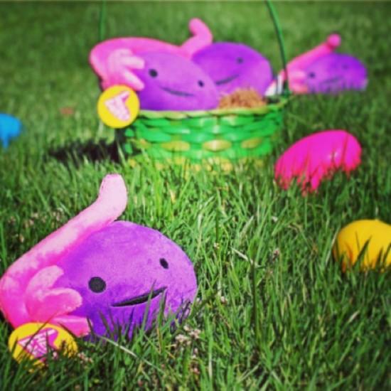 "Easter ""ova"" hunt © @iheartguts"