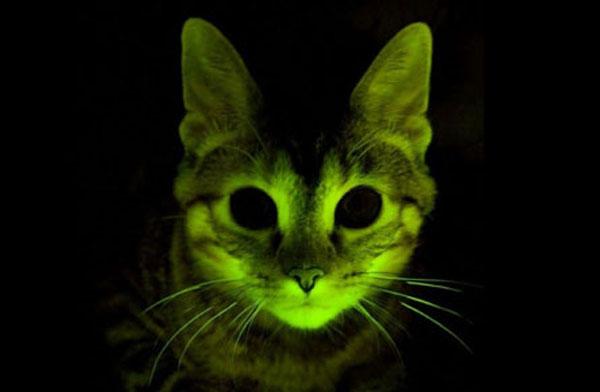 Glow_Cat_mayclinic