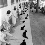 Black cat auditions, 1961