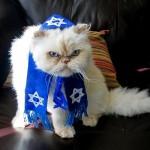 Rabbi Cat