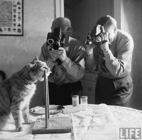 Cat Eating Corn on the Cob, 1951