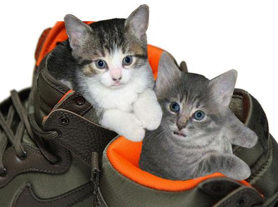 Kozik: Kittens and Kicks